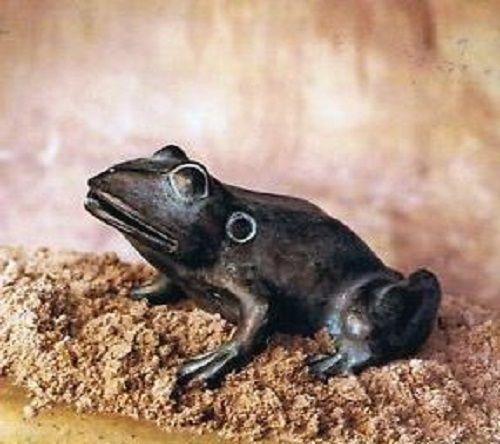 Bronzefigur Froschfigur aus Bronze wasserspeiend