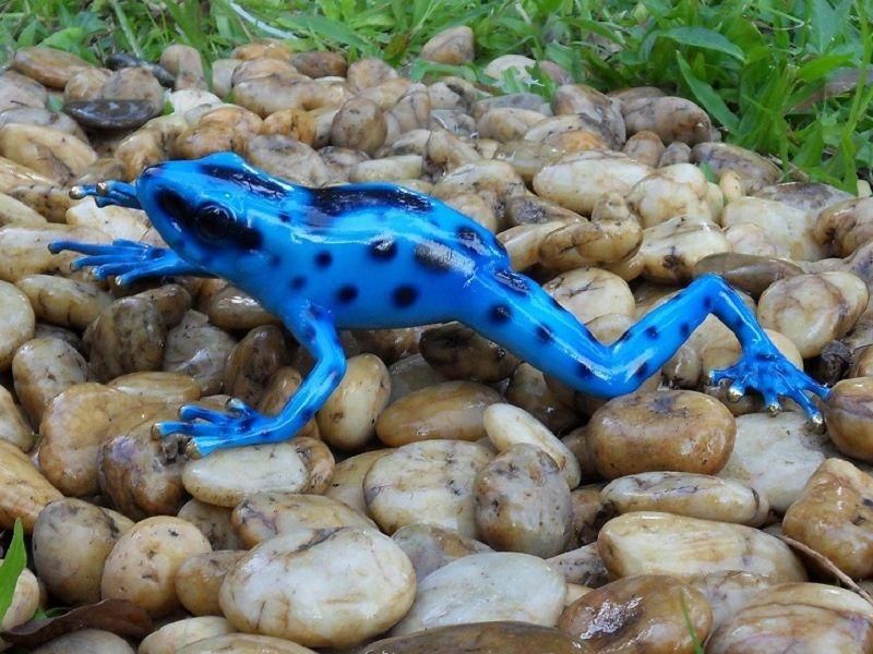 Gartenfigur Regenwaldfrosch Blau